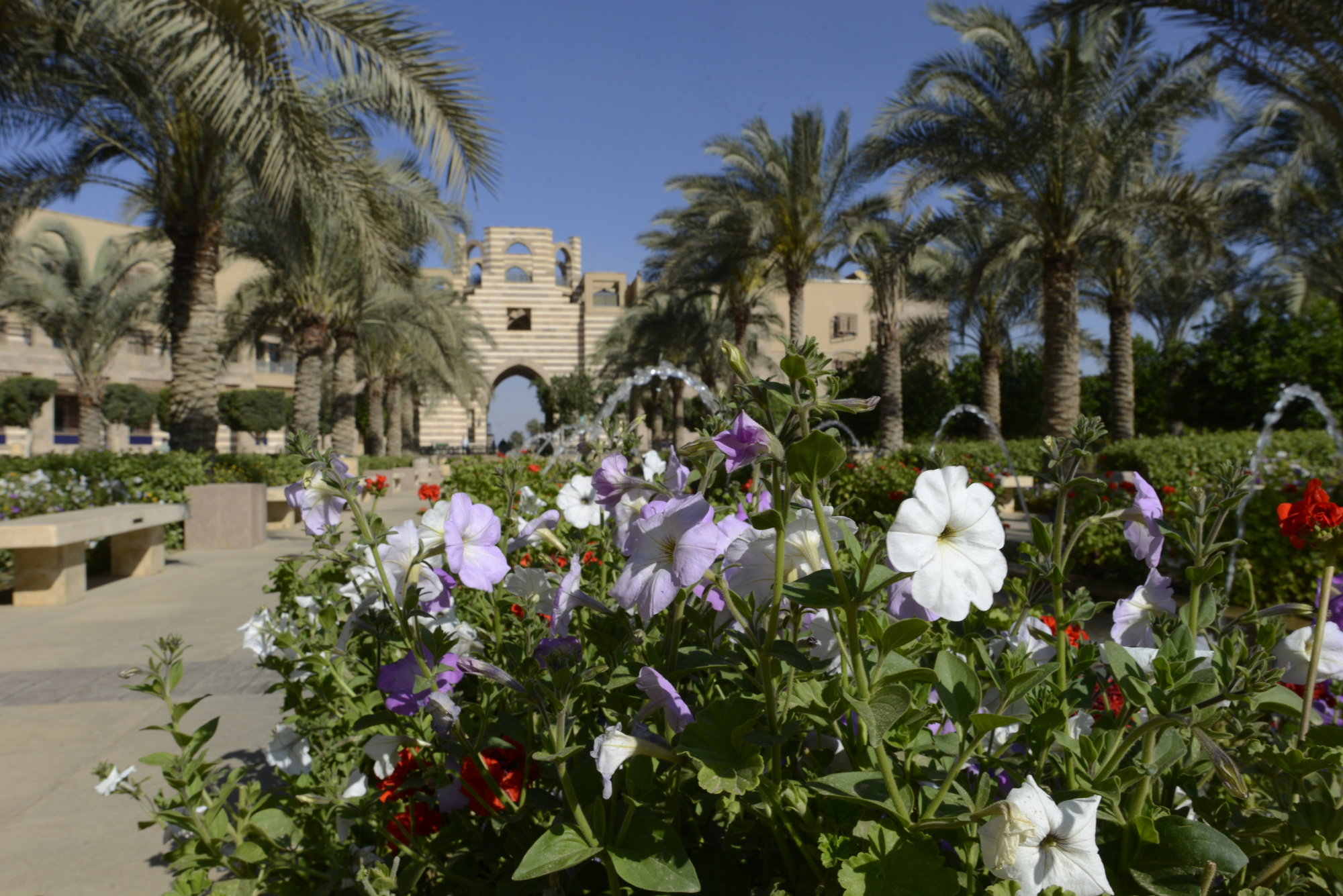 AUC_New_Campus