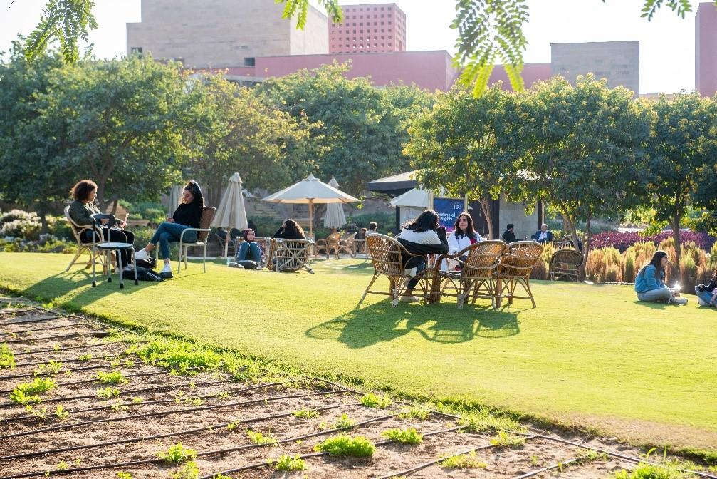 Grove with Seating Area AUC